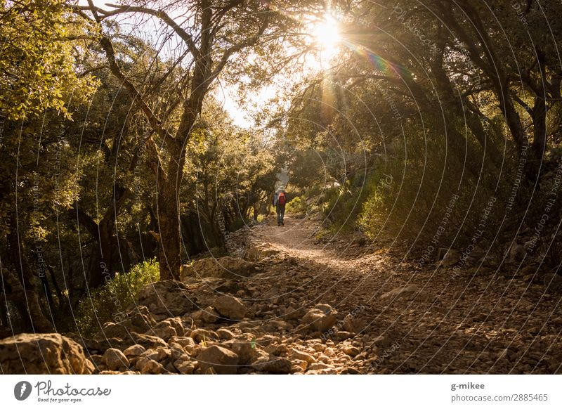 Hiking in the Serra de Tramuntana on Mallorca Human being Masculine Man Adults 1 Nature Landscape Earth Sunlight Tree Forest Rock Mountain Discover Free