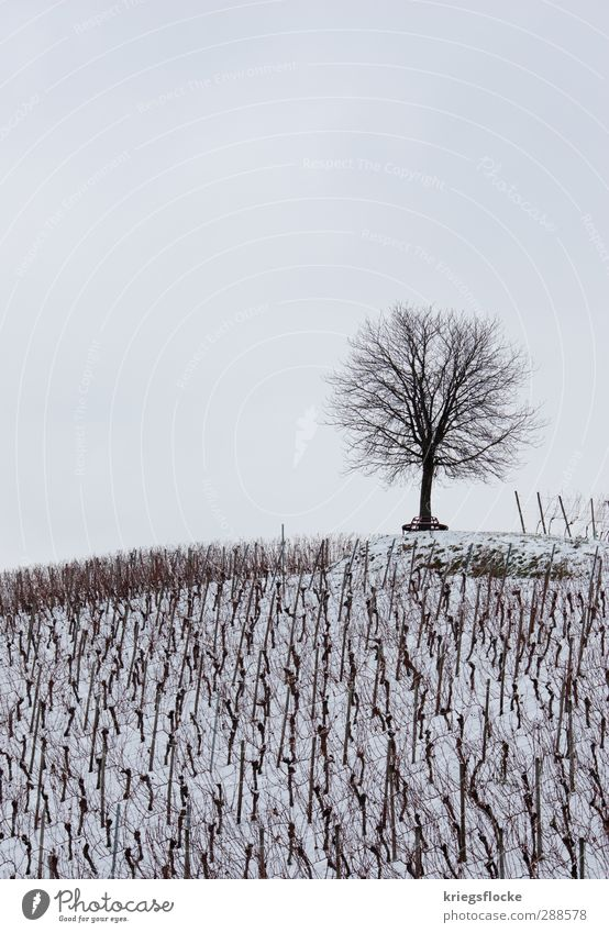 Nature White Tree Relaxation Landscape Loneliness Calm Winter Cold Sadness Snow Death Above Field Idyll Beginning