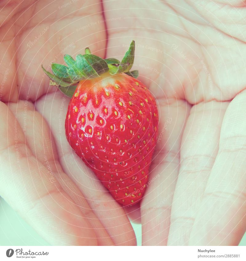 one fresh strawberry in hands Fruit Dessert Eating Summer Human being Hand Nature Plant Leaf Fresh Retro Juicy Red White Colour agricultural agriculture Berries