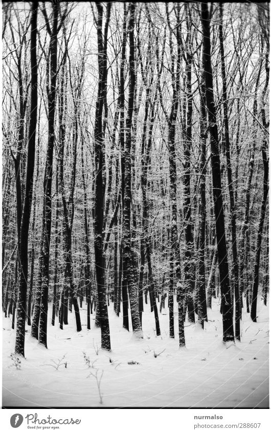 Nature White Tree Winter Landscape Black Relaxation Forest Environment Dark Cold Snow Snowfall Moody Art Ice