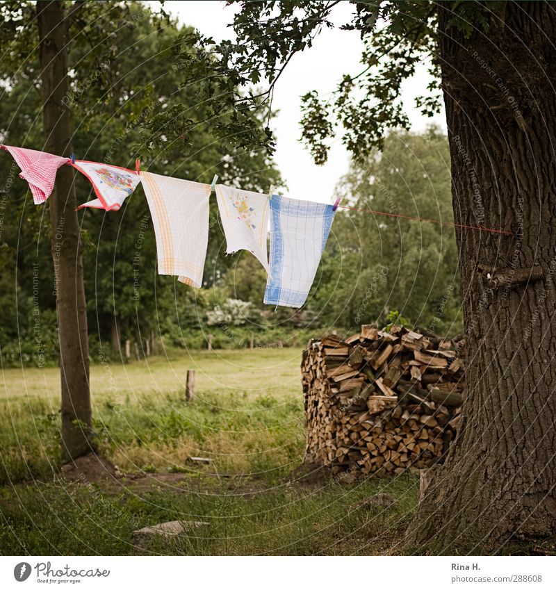 country life Summer Beautiful weather Tree Garden Laundry Wood Hang Authentic Natural Clean Nature Pure Oak tree Towel Colour photo Exterior shot Deserted