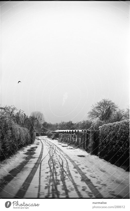 White Loneliness Winter Black Far-off places Environment Dark Cold Snow Lanes & trails Garden Snowfall Art Ice Climate Esthetic