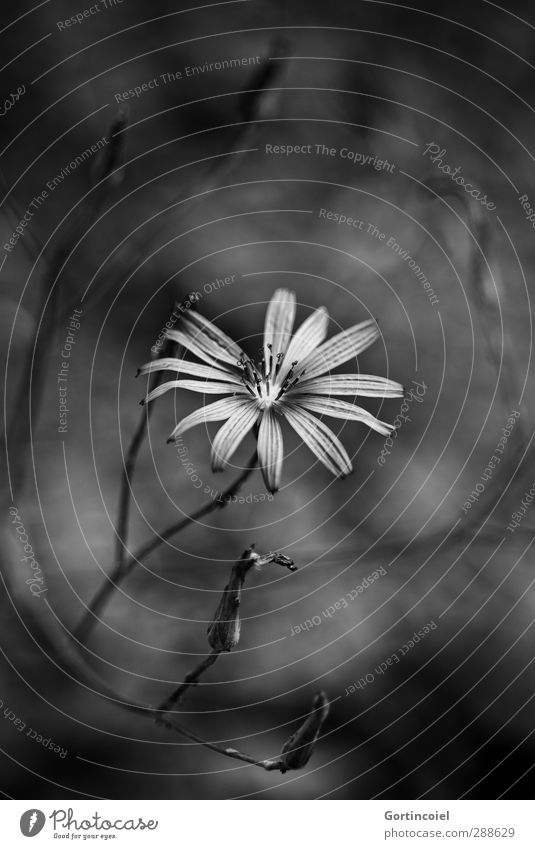 Where there's shadow, there's light. Plant Flower Blossom Dark Bright Beautiful Black White Illuminate Grief Death Sympathy Colour photo Black & white photo