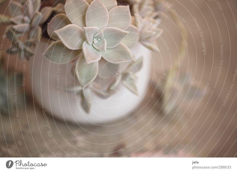 Beautiful Plant Esthetic Pastel tone Pot plant Succulent plants