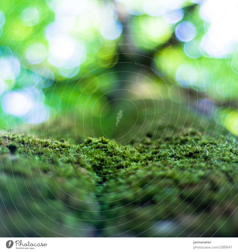 micro-meadow Environment Nature Plant Sky Summer Beautiful weather Tree Park Forest Green Treetop Tree bark Moss Carpet of moss Leaf canopy