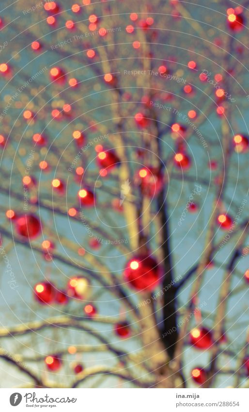 Christmas tree Feasts & Celebrations Christmas & Advent Autumn Winter Tree Blue Red Glitter Ball Bubble Point Spotted Christmas Fair Point of light Branch