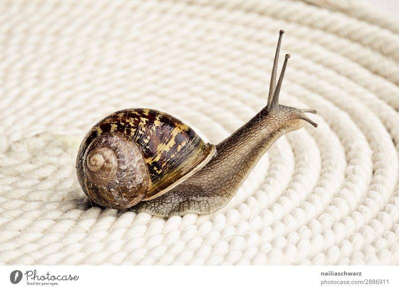 spirals Summer Animal Snail Mollusk Vineyard snail Snail shell Garden snail 1 Sign Ornament Line Bow Spiral Observe Crawl Looking Simple Happiness Muscular