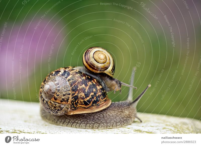 snails Summer Animal Spring Flower Grass Wild animal Snail Garden snail 2 Pair of animals Baby animal Animal family Running Relaxation Crouch Crawl