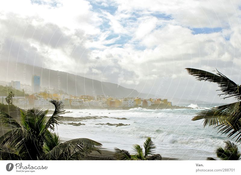 Puerto de la Cruz² Vacation & Travel Beach Landscape Water Sky Clouds Tree Exotic Palm tree Waves Coast Ocean Atlantic Ocean Tenerife Town Skyline