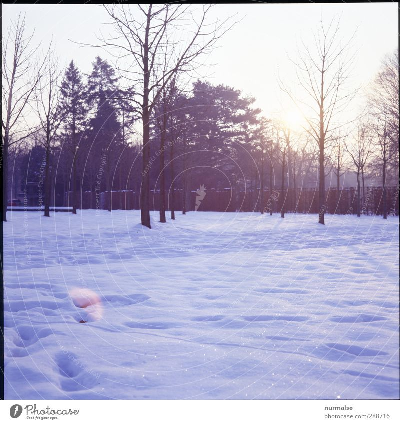 Nature Plant Tree Relaxation Landscape Joy Animal Winter Forest Cold Environment Snow Happy Garden Art Ice