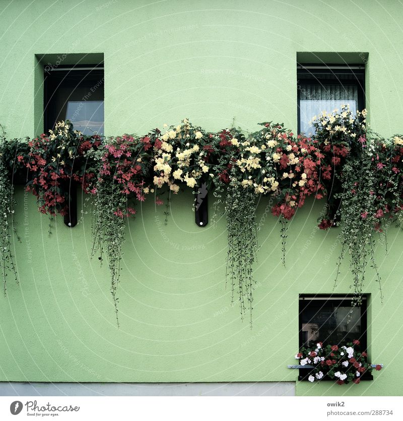 green week Living or residing Flat (apartment) House (Residential Structure) Decoration Plant Flower Leaf Blossom Pot plant Fuchsia flower Geranium Droop