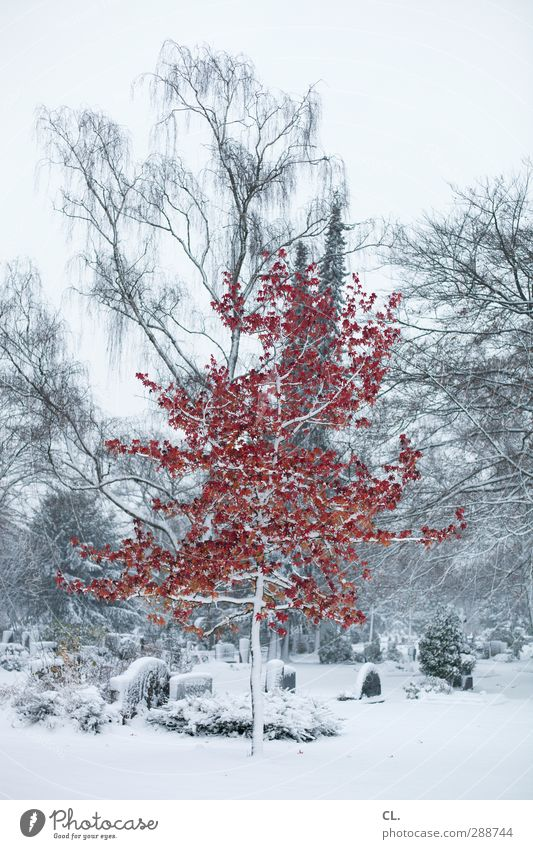 Nature Beautiful White Tree Red Winter Landscape Environment Cold Snow Death Sadness Religion and faith Snowfall Ice Exceptional