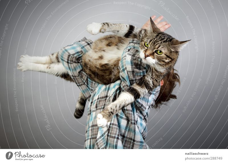 Cat Child Blue Joy Animal Playing Boy (child) Funny Gray Friendship Together Infancy Power Glittering Cute To hold on