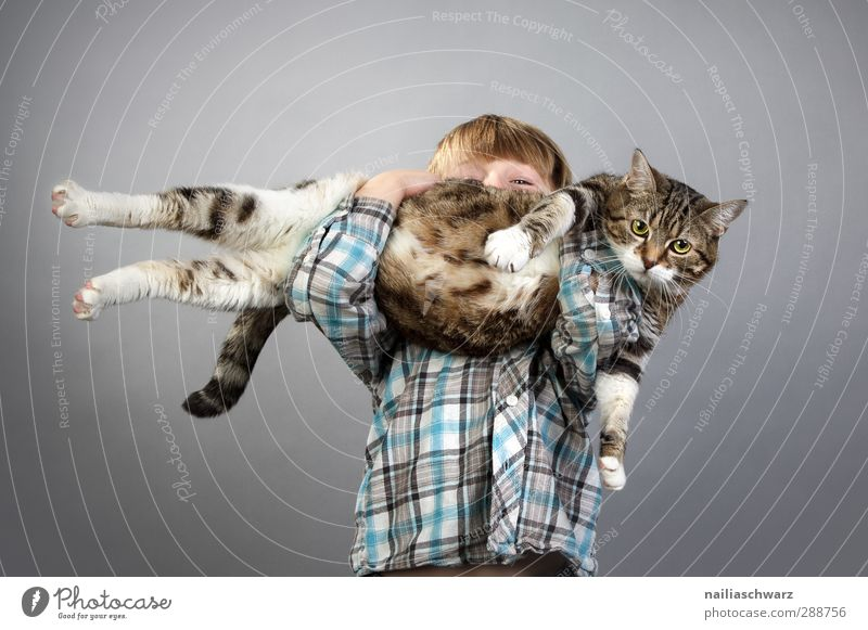 Boy with a cat Human being Masculine Child Boy (child) 1 3 - 8 years Infancy Animal Pet Cat Playing Carrying Esthetic Fat Large Small Funny Blue Brown Yellow