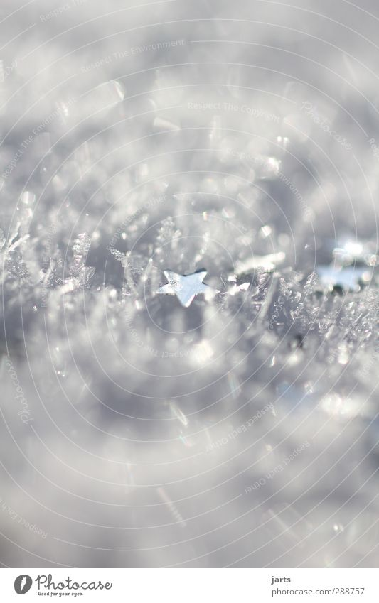 snow star Winter Ice Frost Snow Glittering Hope Desire Christmas & Advent Star (Symbol) Colour photo Exterior shot Close-up Detail Macro (Extreme close-up)
