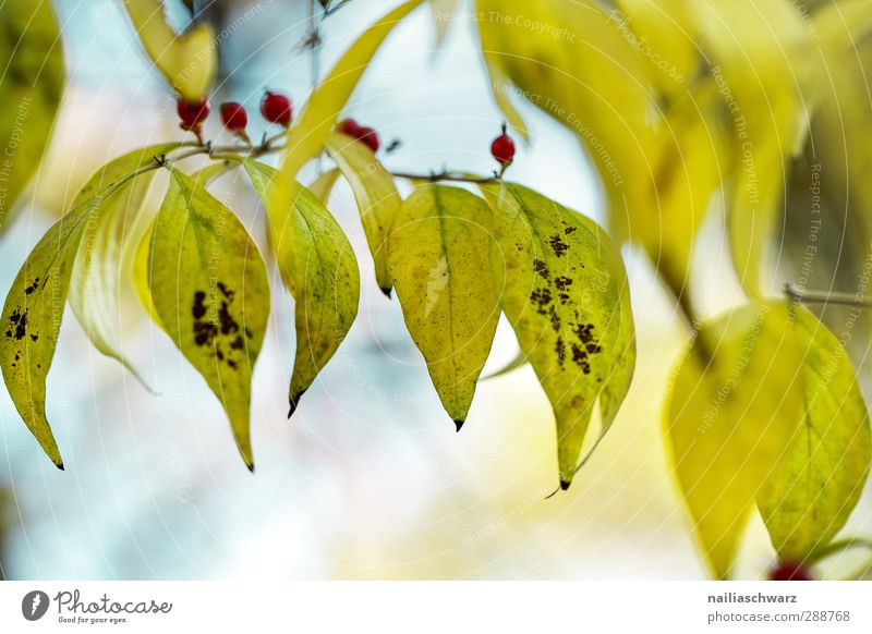 Nature Blue Green Beautiful Plant Tree Leaf Yellow Environment Autumn Garden Moody Natural Park Happiness Romance