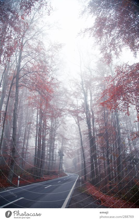 Road into the Unknown Environment Nature Landscape Autumn Winter Bad weather Fog Plant Tree Natural Red Street Colour photo Exterior shot Deserted Day Light
