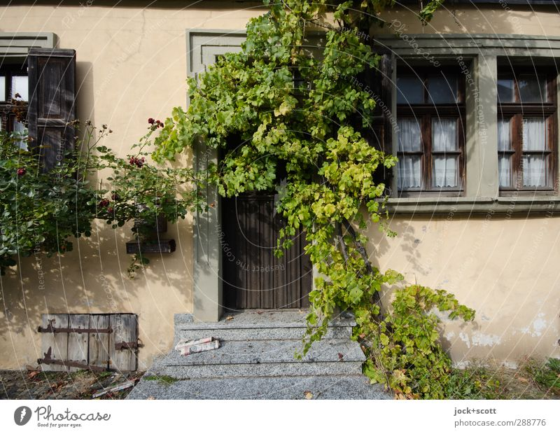 Idyll for late risers Ivy Franconia House (Residential Structure) Old building Facade Window Decoration Growth Exceptional naturally Acceptance Change Newspaper