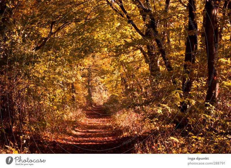 golden mean Environment Nature Landscape Autumn Tree Forest Transience Autumn leaves Autumnal Footpath Lanes & trails To go for a walk leaf fall Colour photo