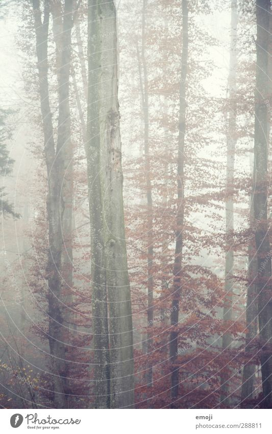 Nature Tree Landscape Forest Environment Cold Autumn Natural Fog Tree trunk Bad weather