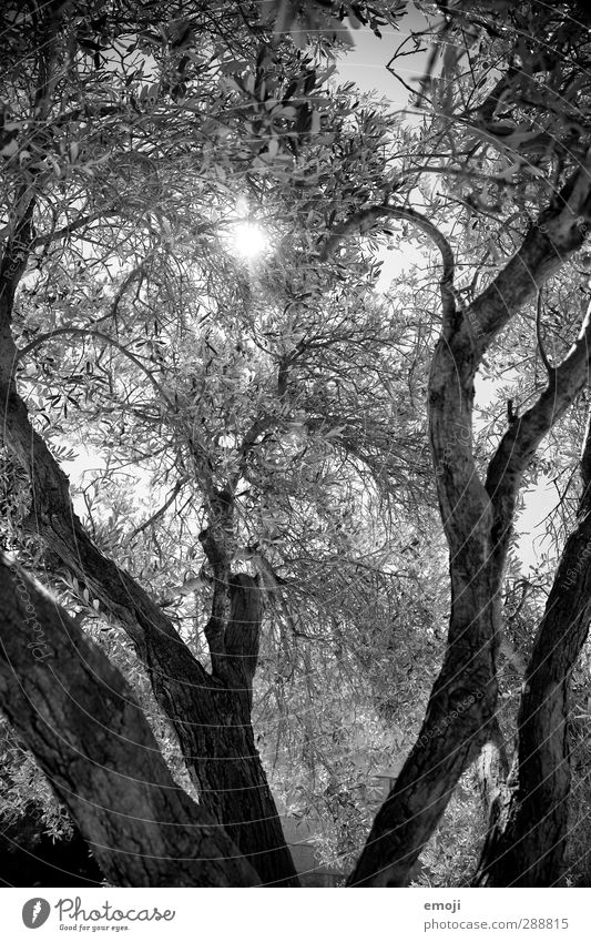 Athena Environment Nature Plant Tree Leaf Branch Black White Black & white photo Exterior shot Deserted Day Light Shadow Sunlight Sunbeam