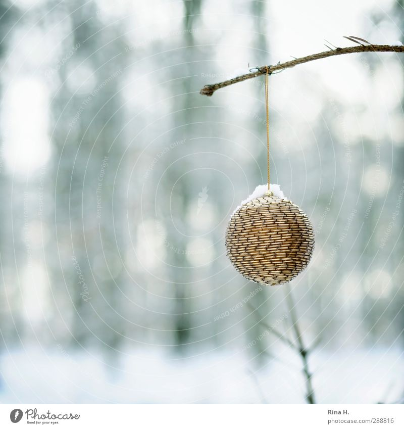 Nature Christmas & Advent Winter Landscape Forest Snow Garden Ice Glittering Authentic Frost Joie de vivre (Vitality) Hang Glitter Ball Anticipation