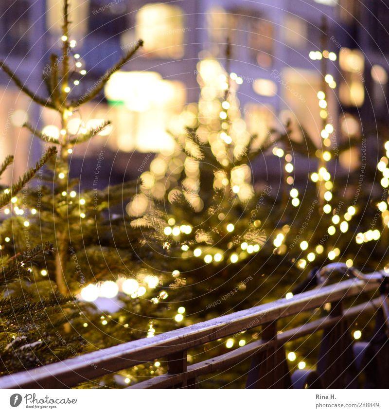 Christmas Climbing Christmas & Advent Illuminate Joie de vivre (Vitality) Anticipation Fir tree Christmas tree Fairy lights Handrail Bicycle handlebars