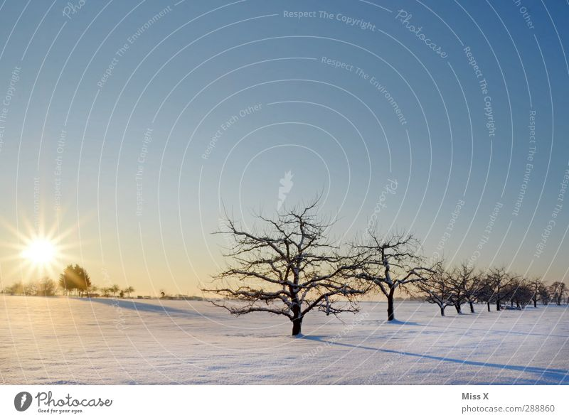 winter wonderland Landscape Sunrise Sunset Winter Beautiful weather Ice Frost Snow Tree Meadow Field Cold White Moody Fruittree meadow Branch Apple tree