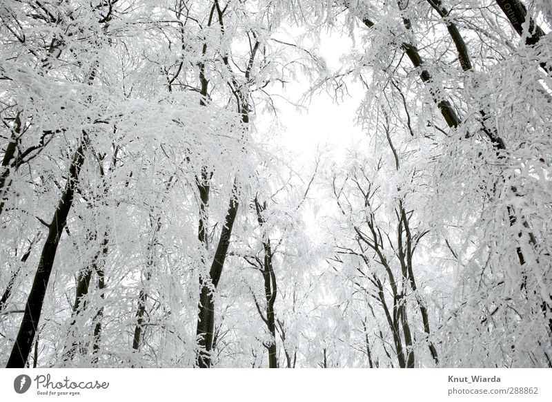 Winter, snow-covered trees Environment Nature Landscape Sky Climate Weather Snow Tree Forest Wood Freeze Cold Beautiful Black White Winter forest Snowscape