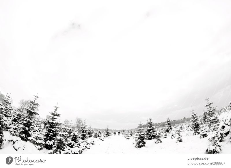 Human being Sky Nature Man White Plant Tree Winter Clouds Landscape Black Forest Adults Far-off places Environment Snow