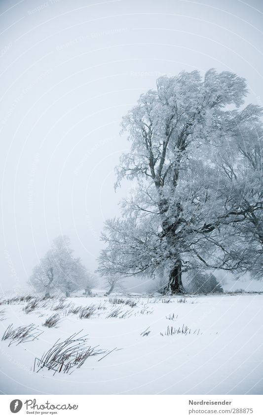 Nature Old White Plant Tree Loneliness Winter Calm Landscape Meadow Cold Snow Life Senior citizen Healthy Ice