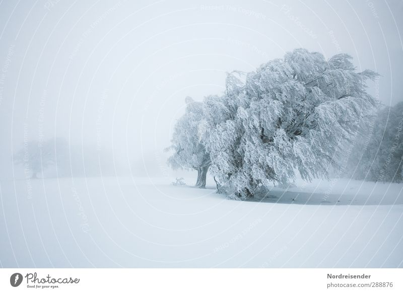 Nature White Plant Tree Loneliness Winter Calm Landscape Cold Snow Life Ice Wind Power Climate Fog