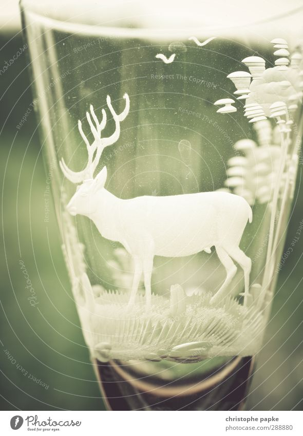 glassmakers Glass Drinking Agriculture Forestry Kitsch herbal schnapps Liqueur glass Alcoholism empty glass Deer Gravure Sixties The fifties Champagne glass
