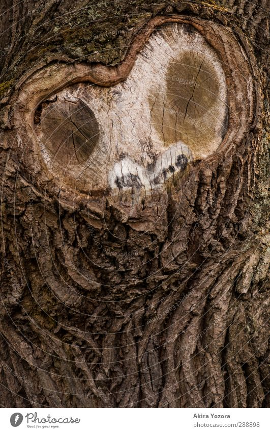 o.o. Tree Tree bark Face Observe Nature Natural Looking Watchfulness