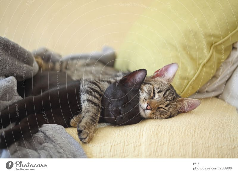Cat Beautiful Animal Lie Friendship Together Warm-heartedness Sleep Trust Pet Safety (feeling of) Embrace Sympathy Love of animals Acceptance Agreed