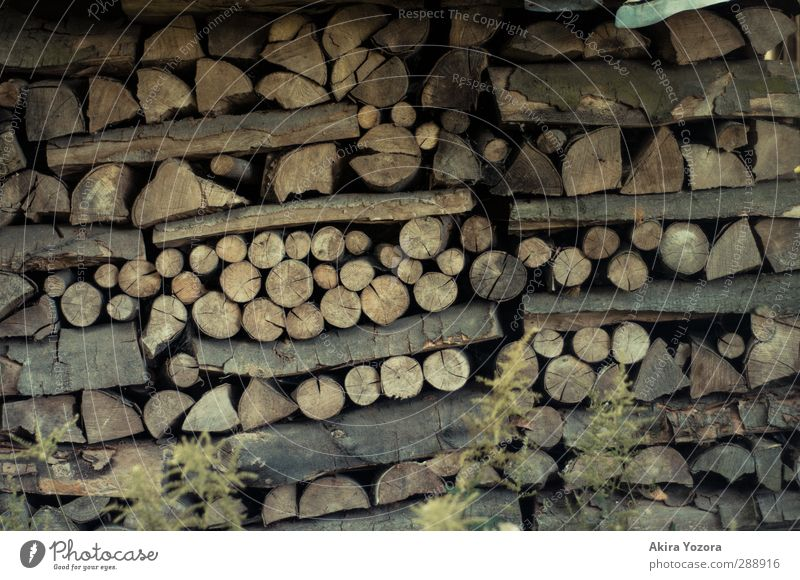 stacking wood Wood Nature Branch Stack Circle Line Collection Storage Supply