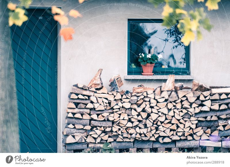 Wood in front of the hut Tree Nature House (Residential Structure) Wall (building) Window Flowerpot Autumn Storage Supply Protection Safety (feeling of) Blue