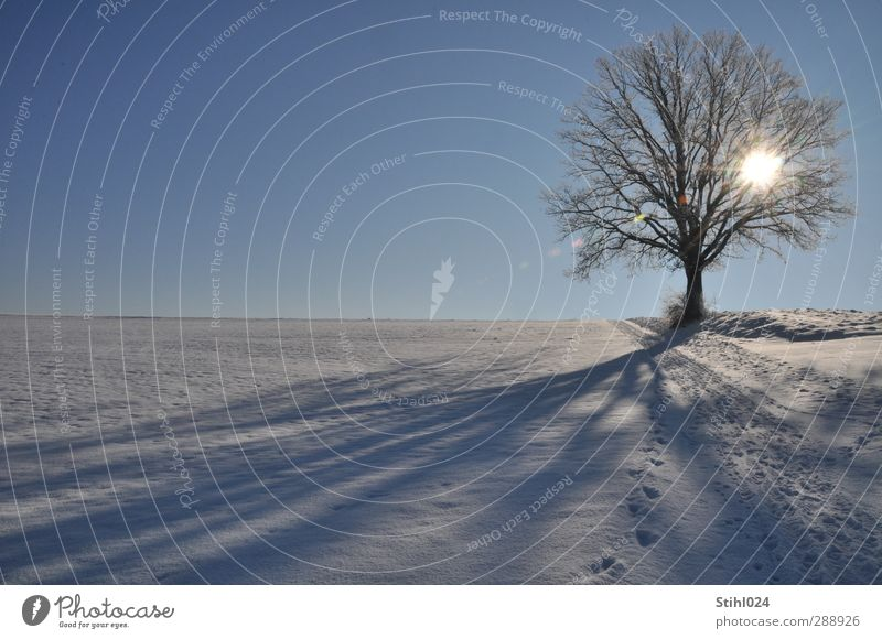Blue Tree Loneliness Winter Calm Landscape Relaxation Environment Cold Snow Horizon Ice Contentment Hiking Beautiful weather Esthetic
