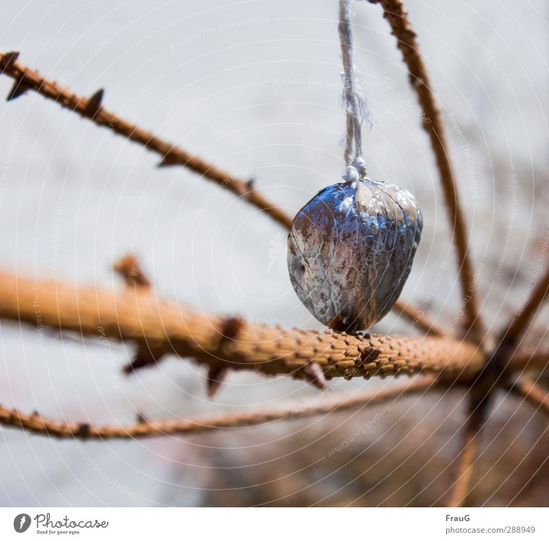 The rest of the party... Christmas & Advent Spring Tree Spruce Walnut Wood Hang Brown Silver Forget Sadness Past Adorned Colour photo Exterior shot Deserted