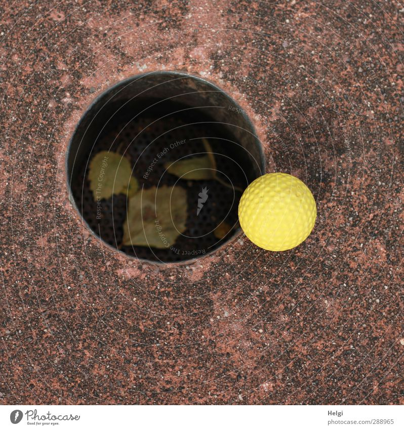 I could've been in there, too. Leisure and hobbies Playing Mini golf Hollow Ball Autumn Leaf Concrete Plastic Lie Esthetic Authentic Exceptional Round Brown