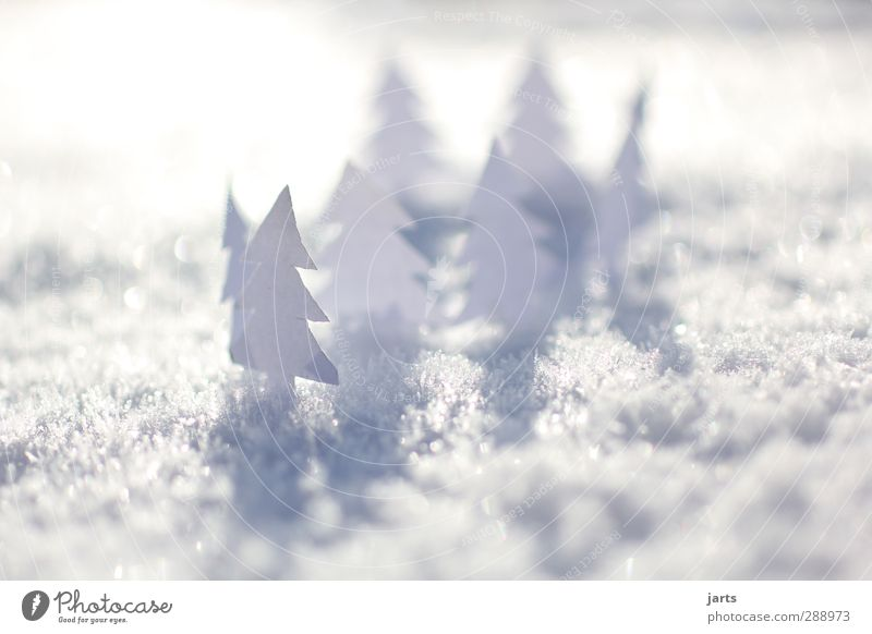 Nature Christmas & Advent White Tree Winter Landscape Forest Snow Natural Beautiful weather Paper Fir tree Handicraft