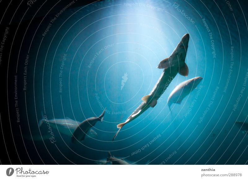 aquarium Water Sunlight Animal Fish Aquarium 4 Flock Swimming & Bathing Blue Black Adventure Contentment Movement Discover Horizon Idyll Ease Nature