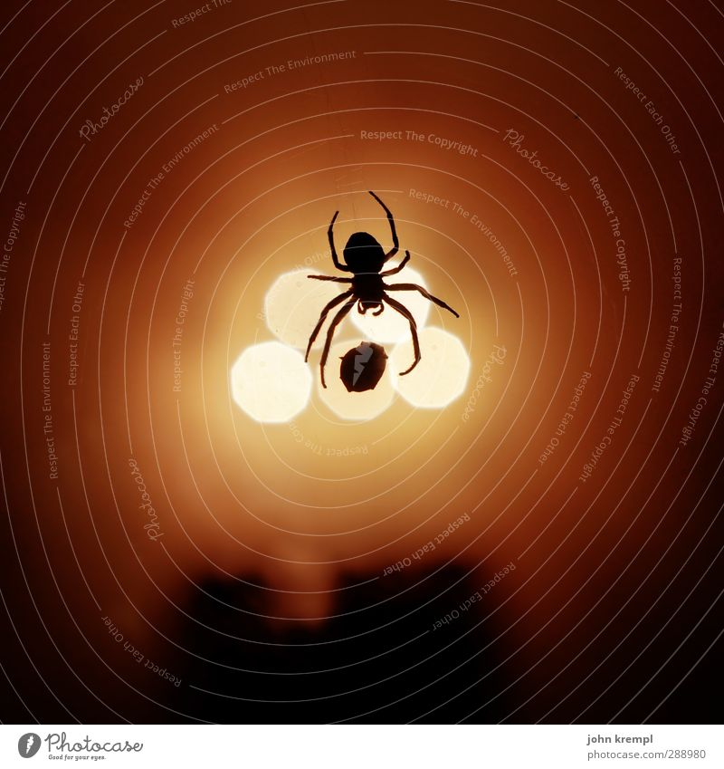 darned and woven on Animal Spider 1 To feed Hang Illuminate Disgust Creepy Hideous Yellow Orange Red Fear Bizarre Apocalyptic sentiment Threat Nature