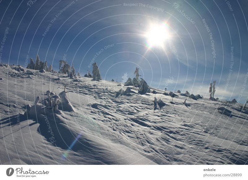 winter sun Black Forest Winter Back-light Cold White Mountain Snow Sun Landscape Sky Blue