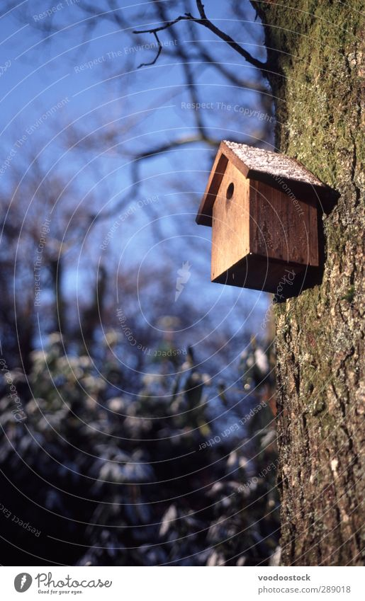 Wooden Birdhouse Blue House (Residential Structure) Cold Garden Brown Ice Living or residing Frost Branch Tree trunk Safety (feeling of) Blue sky Home Nest Hole