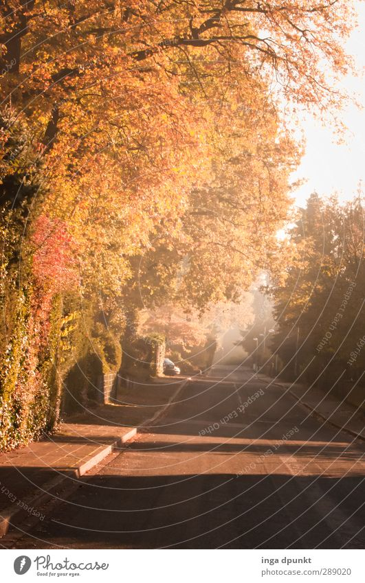 Empty streets Environment Plant Autumn Tree Bushes Garden Suburb Town Pavement Street Living or residing Leaf Autumn leaves Deserted Natural Lanes & trails