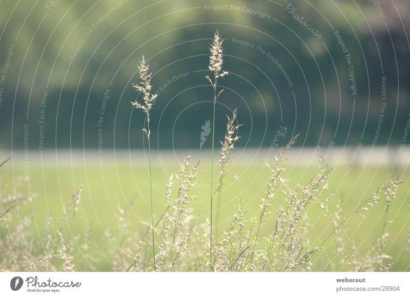still air Grass Blade of grass Meadow Calm Summer Spring