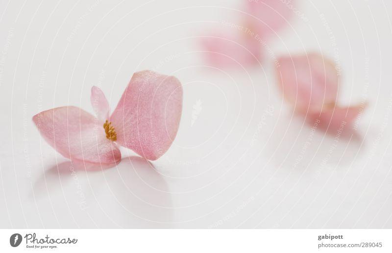Quiet tones Nature Leaf Blossom Pot plant Fragrance Exotic Positive Feminine Pink White Emotions Moody Joie de vivre (Vitality) Spring fever Trust Sympathy