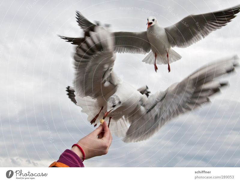 Human being Heaven Hand Clouds Animal Bird Crazy Wing Group of animals Fingers Seagull Argument To feed Fight Flock Feeding