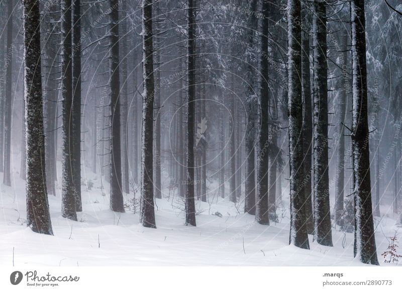 Nature Forest Winter Dark Environment Cold Snow Moody Ice Fog Change Elements Frost Coniferous trees Coniferous forest